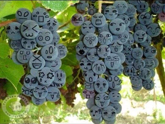 水果禮盒-葡萄